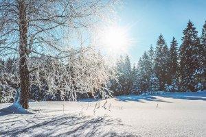 Fit trot Schnee Wald mit Schnee