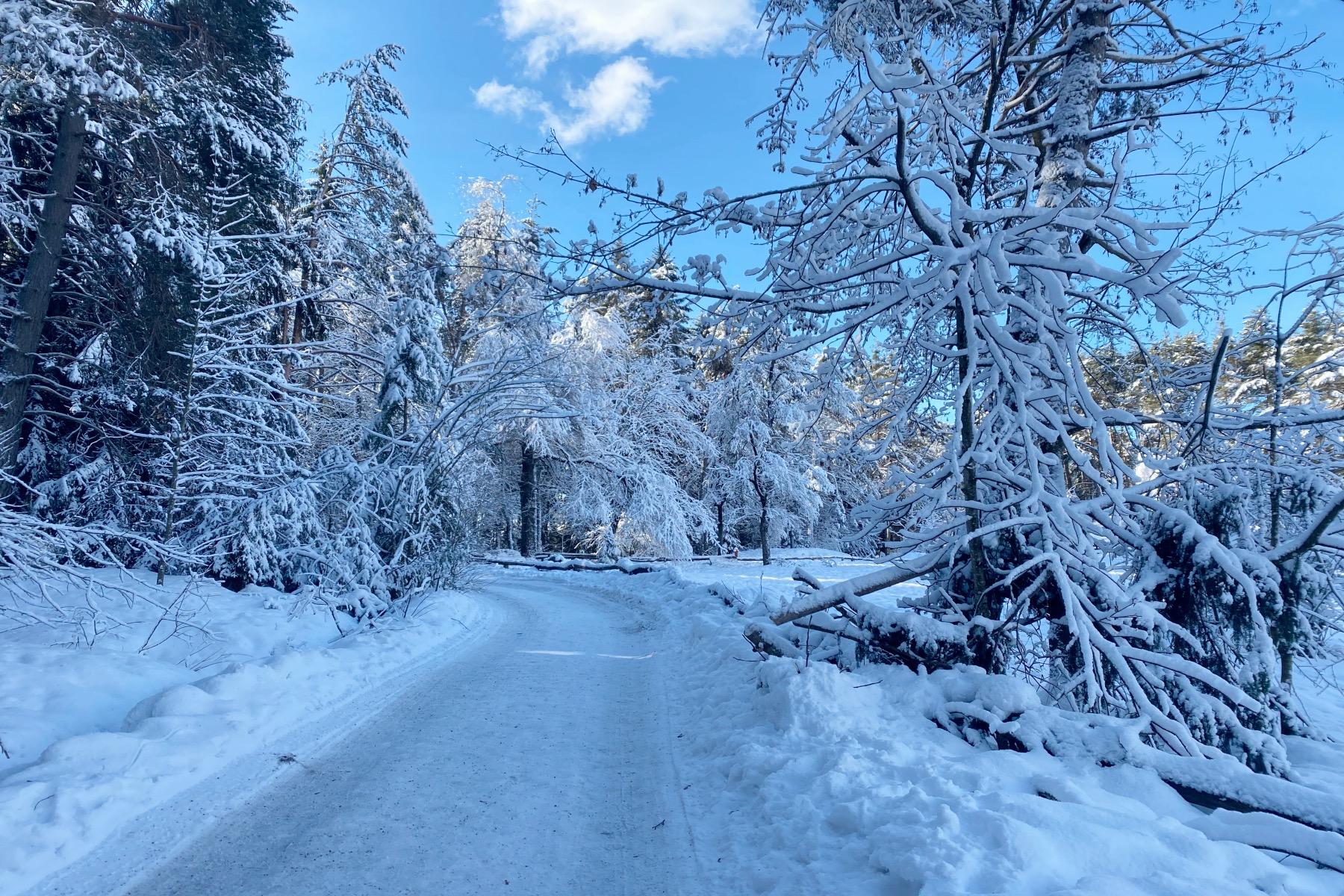 Fit trotz Schnee Wald mit Schnee – ©Geheimtipp Augsburg