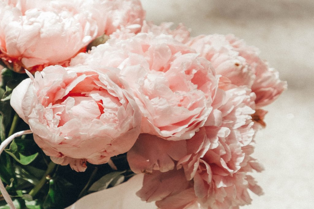 vvalentinstag Blumen – ©Unsplash