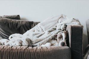 Serienguide netflix februar sofa mit hund – ©Unsplash