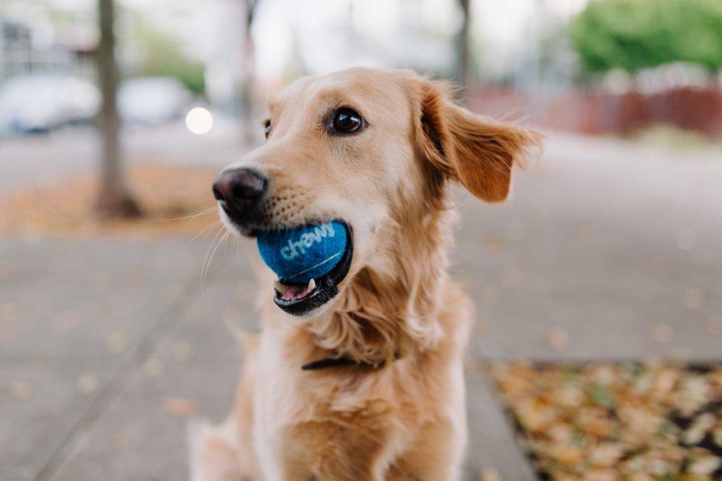 lockdown im Frühling gassi gehen Hund – ©Unsplash