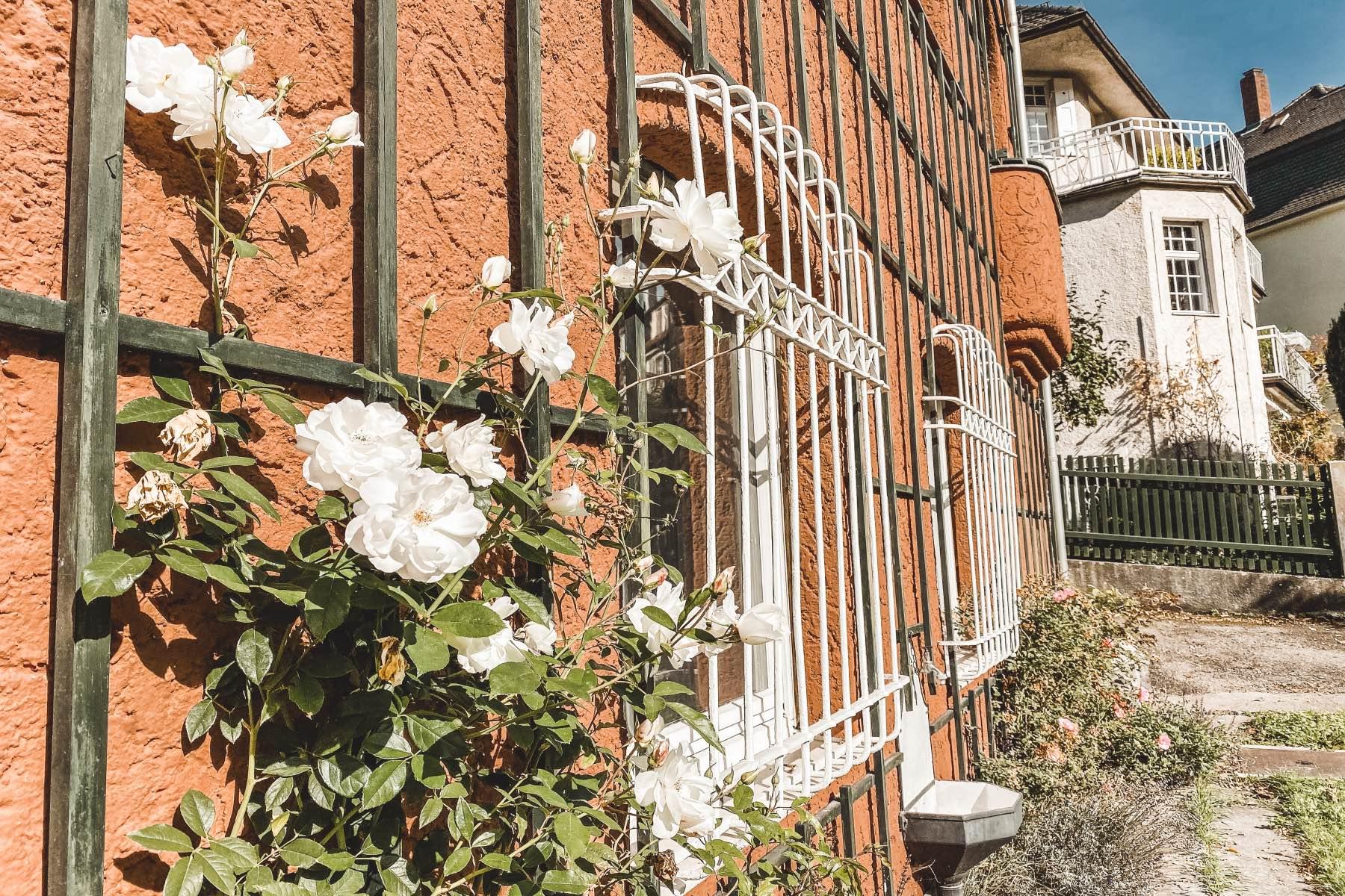 Augsburger Stadtteile Thelottviertel haus mit Rosen
