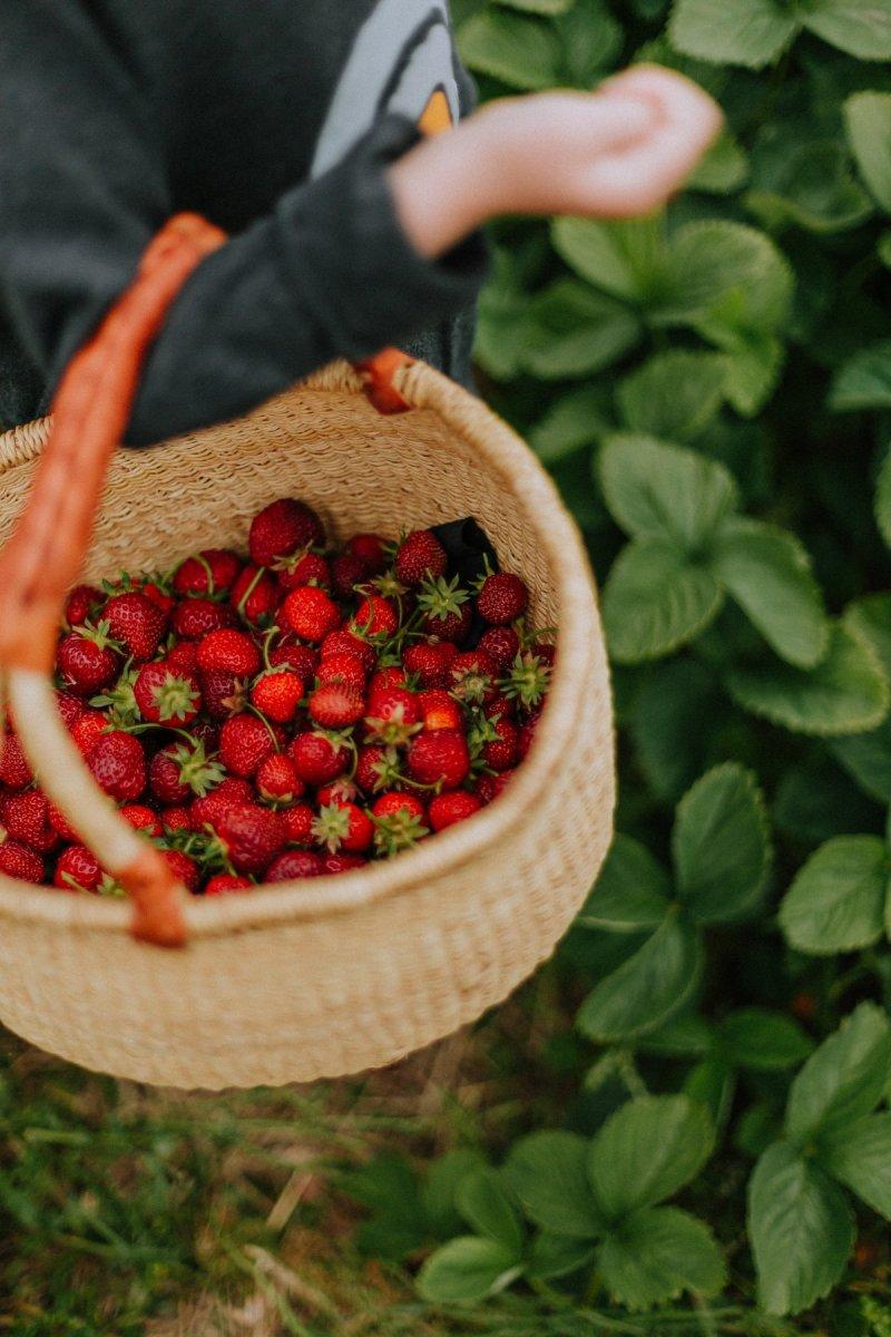 geheimtipp augsburg erdbeeren pflücken2